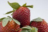 Macro Photo Of Ripe Red Strawberries. A Macro Close Up Photo Of Ripe Red Strawberries With A White B poster