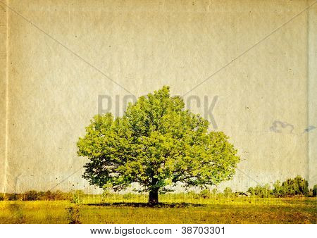 big oak on grunge background