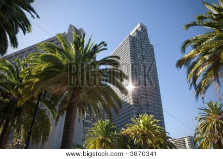 Palms And Offices