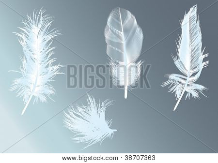 illustration with feathers on blue background