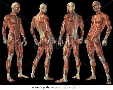 High resolution concept or conceptual human or man 3D anatomy body with muscle isolated on black background as metaphor to medicine,sport,male ,muscular,medical,health,biology or fitness group or set