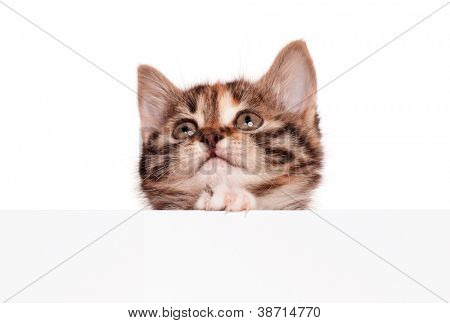 Pretty kitten with empty board isolated on white background
