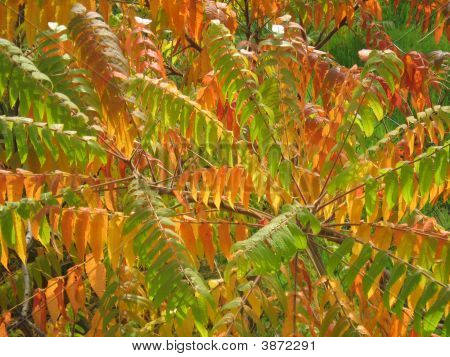 Colorful Leaves