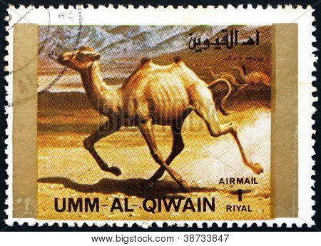 Postage stamp Umm al-Quwain 1972 Camel, Animal
