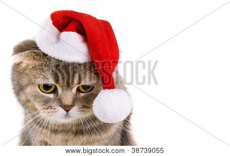 Cute gray cat in Santa Claus hat isolated on white background
