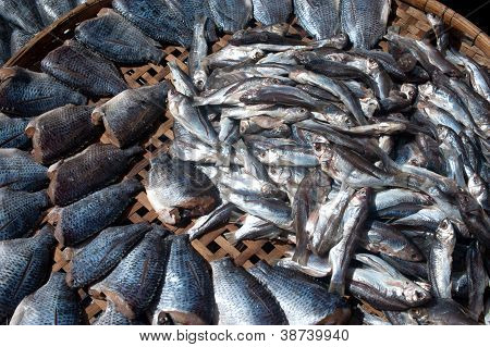 Sun Fish  In Threshing Basket .
