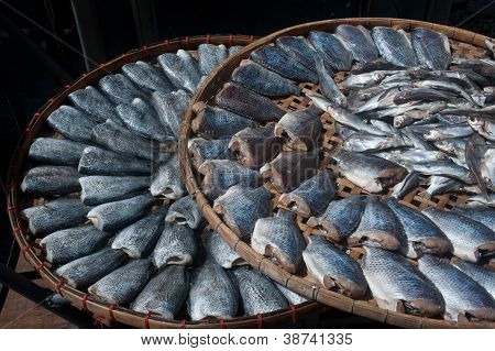 Sun Fish  In Threshing Basket .