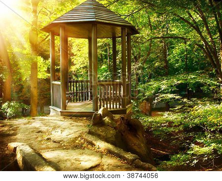 Arbor no Parque outonal. Paisagismo