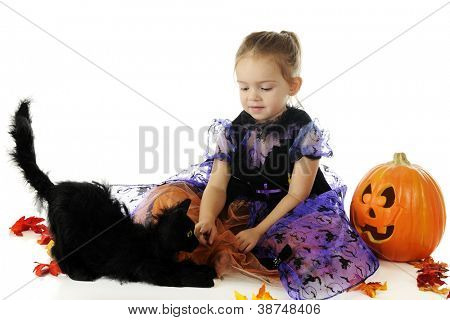 A beautiful preschooler in a pretty, but spooky, Halloween dress playing with an ugly black cat.  On a white background.