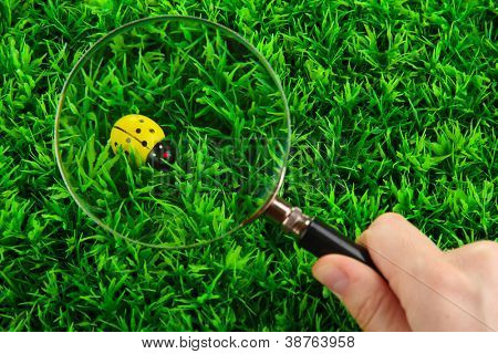 ladybird and magnifying glass in hand on green grass