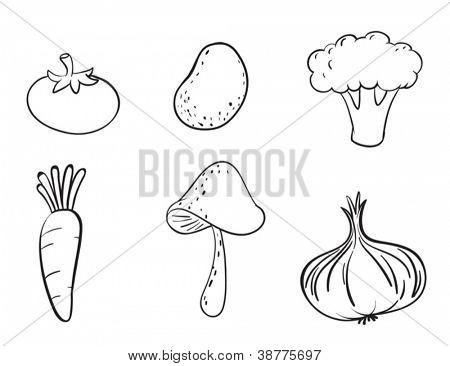 detailed illustration on various vegetables on a white background