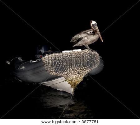 Pelikan On A Boat