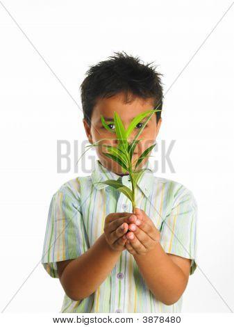An Adorable Asian Boy Holding A Green Sapling