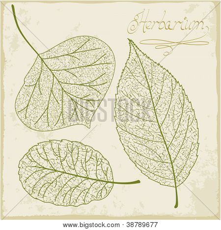 Vector leaf skeleton set.