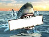 stock photo of great white shark  - A shark holding a billboard in his mouth - JPG