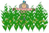 stock photo of corn stalk  - This illustration depicts a scarecrow in the middle of a corn field - JPG