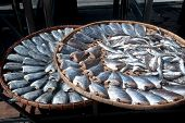 picture of threshing  - Outdoor Sun Fish In Threshing Basket  - JPG