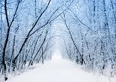 picture of snowy-road  - Winter - JPG