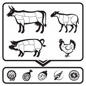 image of veal meat  - plan for cutting meat cows - JPG