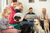 stock photo of veterinary surgery  - Busy Waiting Room In Veterinary Surgery - JPG