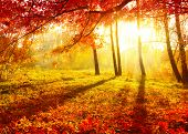 picture of orange-tree  - Autumn - JPG