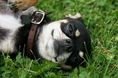 stock photo of spayed  - a cute puppy in the grass - JPG