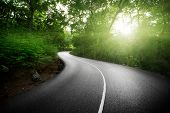 image of jungle  - empty road in jungle of Seychelles islands - JPG