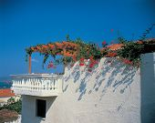 White Building With Flowers poster