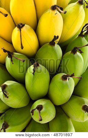 Raw Green And Yellow Ripe Bananas
