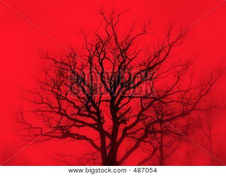 Red Mist Oak