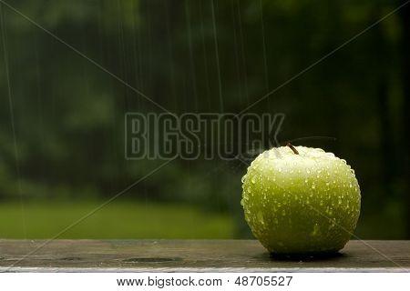 Apple Splashed By Rain