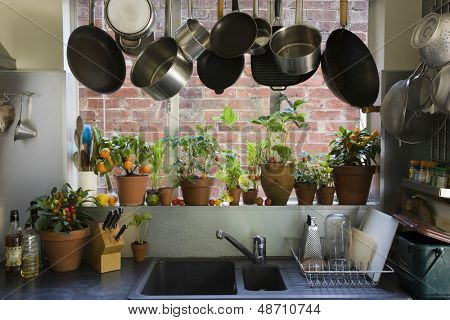 Saucepans hanging over sink against potted plants on window sill in domestic kitchen