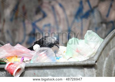 Bird On Garbage Dump
