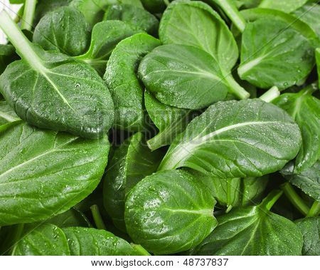 fresh green leaves spinach or pak choi surface close up