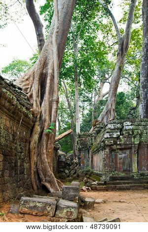 Ta Prohm Temple, Siem Reap Cambodia