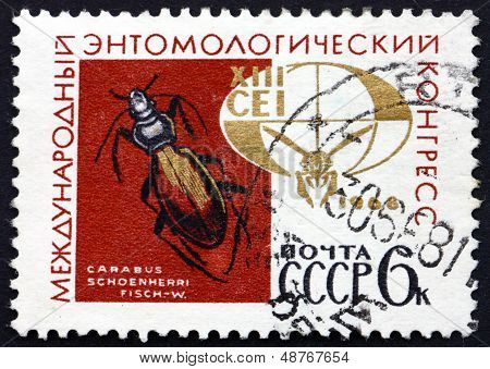 Postage Stamp Russia 1968 Ground Beetle