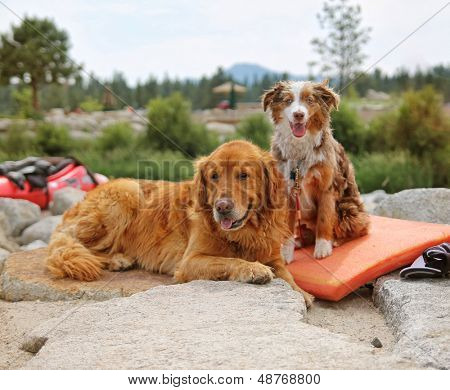 a pair of dogs enjoying the outdoors on a beautiful summer day