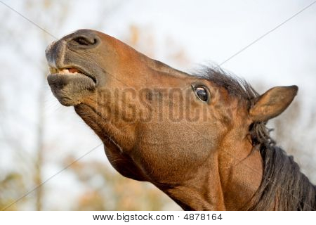 Close-up Of Horse's Face