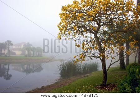 Florida Tree In Bloom