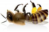 picture of mites  - Illustration of an isolated dead honey bee with pollen baskets - JPG