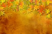 picture of fall decorations  - Fall leaves  - JPG