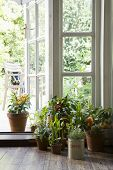 stock photo of windows doors  - Potted plants on hardwood floor by open door in house - JPG