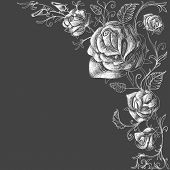 picture of rose  - Roses decoration over dark background vector - JPG