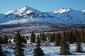 picture of denali national park  - Snow dusts the forests and mountains of Denali National Park - JPG