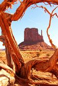 picture of bute  - Tree framing a bute at monument valley - JPG