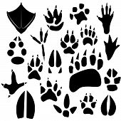 foto of animal footprint  - Footprints of birds and animals - JPG