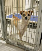 stock photo of forlorn  - a dog in an animal shelter - JPG