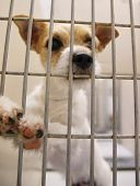foto of forlorn  - a dog in an animal shelter - JPG