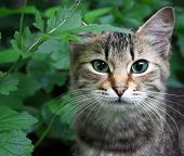 stock photo of animal eyes  - Portrait of a cat in a grass - JPG