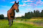 stock photo of grass area  - rural landscape with the horse who was grazed on a meadow - JPG